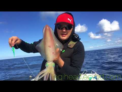 How to catch squid in deep water