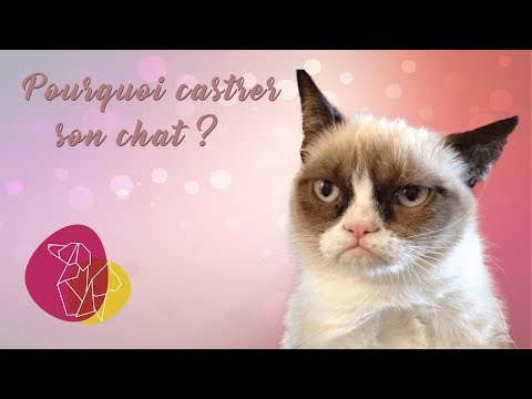 Pourquoi Castrer Son Chat