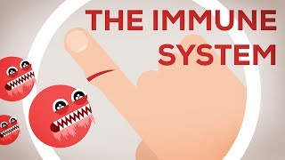 The Immune System Explained I - Bacteria Infection