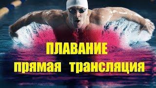 Плавание Детские соревнования.  SUPER CUP BSUPC  3-й  этап. День второй #прямаятрансляция
