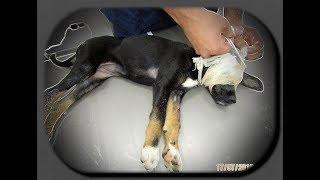 Алкаш издевался над щенком. Вызвали полицию. История Дэйми/The alcoholic mocked the puppy