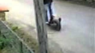trotinette avec un moteur de scoot