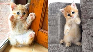 Download Baby Cats - Cute and Funny Cat Videos Compilation #35 | Aww Animals