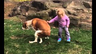 "A Little Girl Tell Her Dog ""Great Job Pooping"" [Funny Video]"