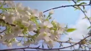 Talha Bora ÖGE - Herşey Ondan Sen Ne Sandın