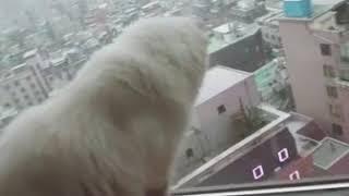 눈오는거 신기하다옹 ㅎㅎ 고양이 눈구경