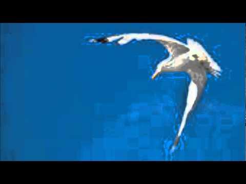 Gordon Bok - Gulls in the Morning.wmv