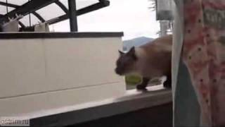 Funny Cat - Bad Luck