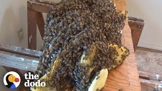 Man Removes Huge Beehive Hidden Beneath Floor | The Dodo