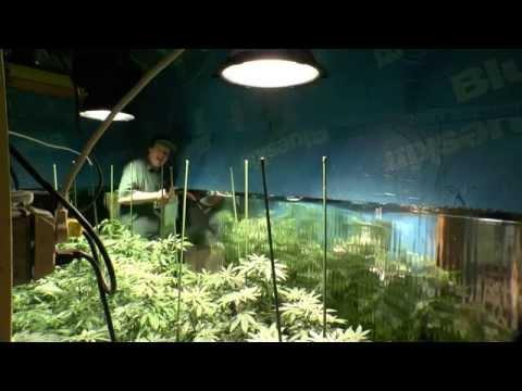 Herbal Growing With LEDs 100% Organic Gardening