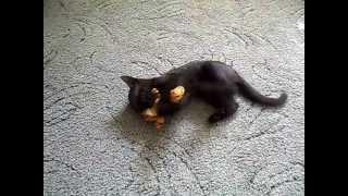 Кот играется с тигром.(Cat plays with a tiger.)