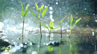 11 Hours of Relaxing Music with Rain Sounds • Soft Piano Music, Sleep Music, Background Music