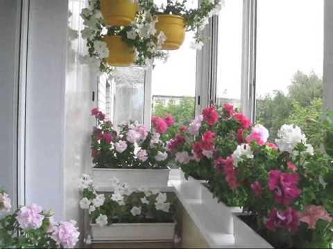 Цветы на балконе 16 июля 2013 - YouTube