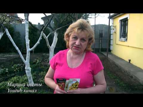 Настурция - посев семян, выращивание, уход