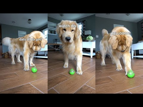 My Dog Reacts to Cat Toy