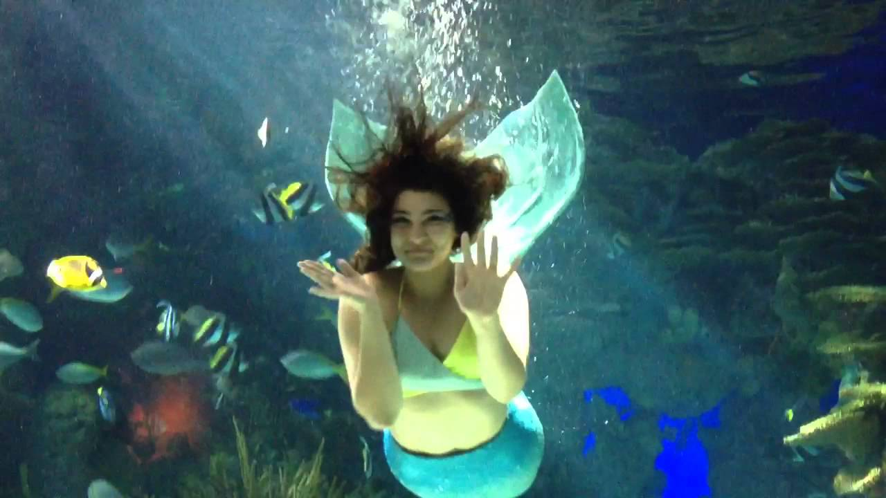 Mermaid Show At Ripley S Aquarium Of The Smokies