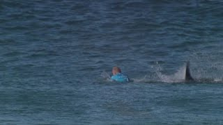 Sudafrica: incontri ravvicinati del terzo tipo con gli squali