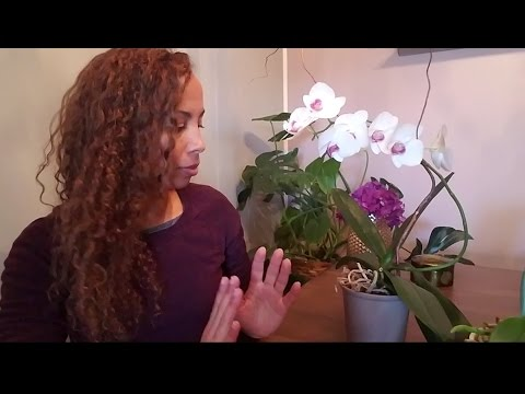 How To Make Orchids Rebloom