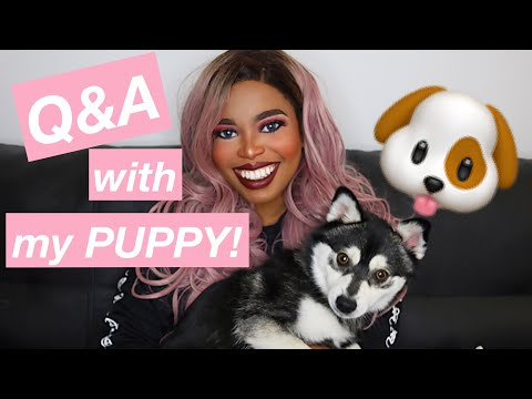 Q&A with my puppy Mochii!