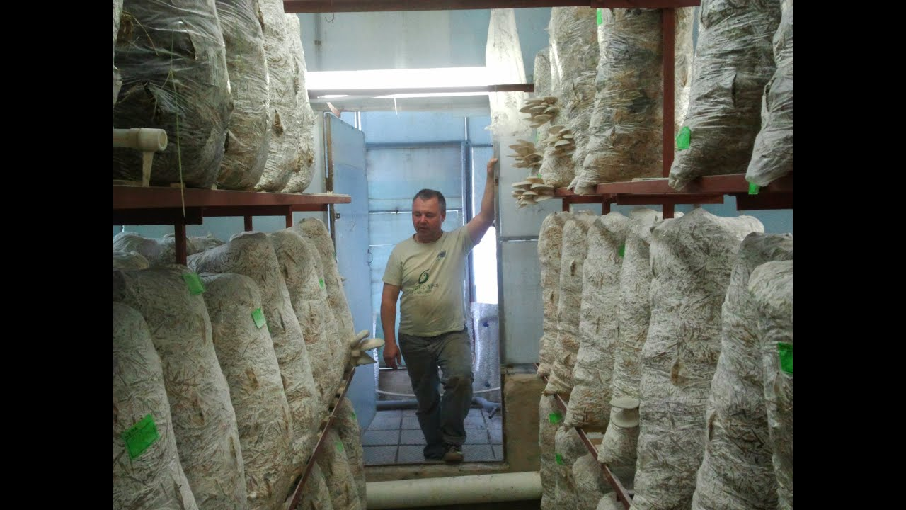 Технологии выращивания вешенки - Азбука грибовода, ТМ Футар