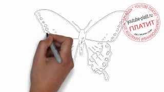 Как нарисовать бабочку карандашом поэтапно(83 486 рублей за 22 дня! Новая уникальная система заработка! http://glopages.ru/affiliate/1905293 НАЖИМАЙ прямо сейчас и УЗНАЕШЬ..., 2014-06-29T08:17:28.000Z)