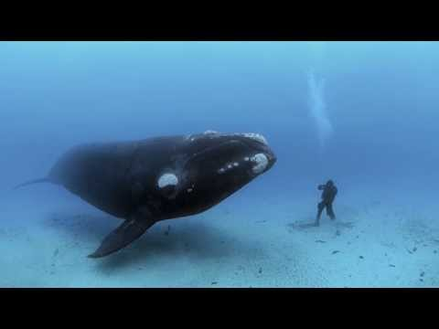 Brian Skerry - National Geographic Underwater Photographer