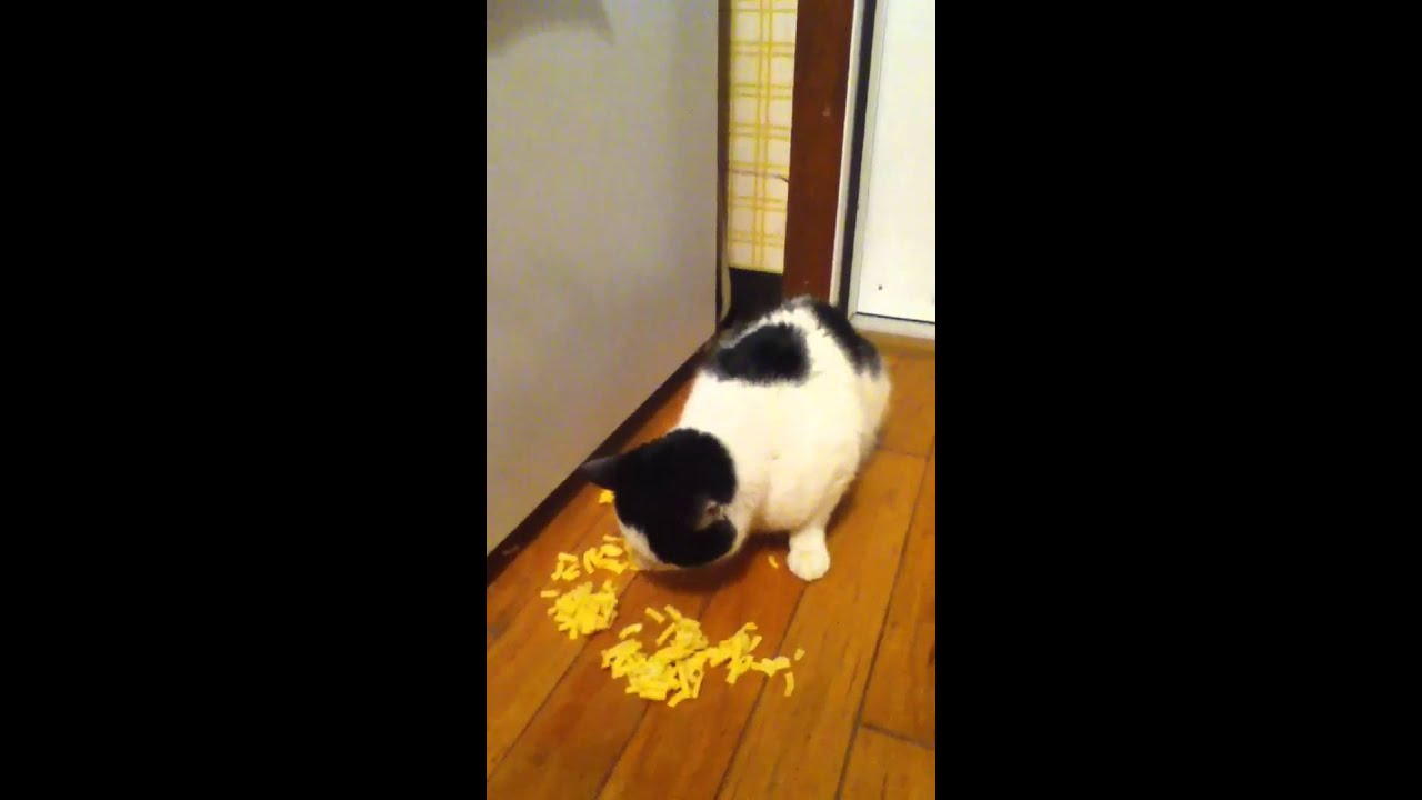Cats Eating Mac And Cheese