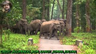 Big Elephant Herd & Their Super Activity.