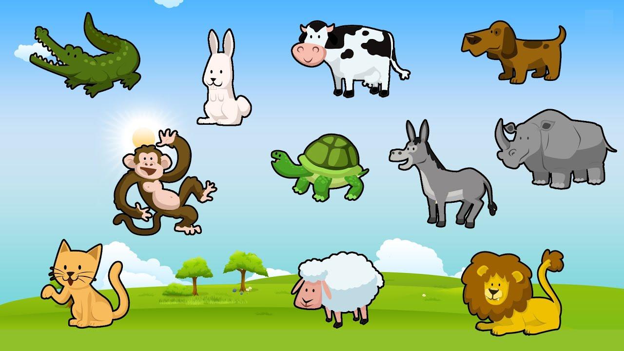 Hayvanları Tanıyalım Eğitici Eğlenceli Türkçe çizgi Film Animasyon