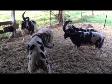 The Trouble with Rams