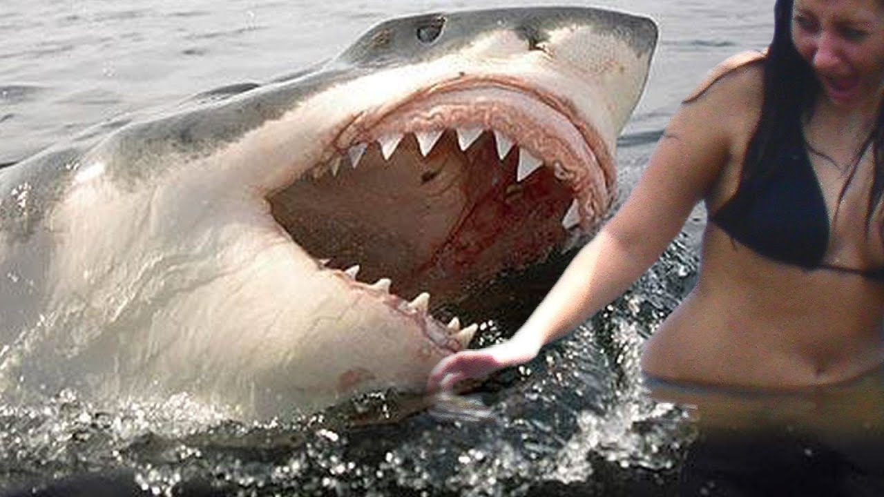 Sharks eating people in real life
