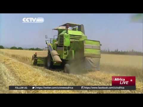 Algeria adopts agriculture programme to increase grain yield