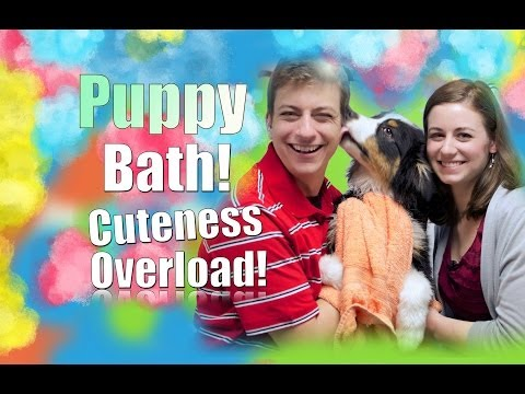 Teach YOUR Dog to LOVE Getting a Bath!