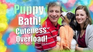 how to bathe your dog step be step grooming