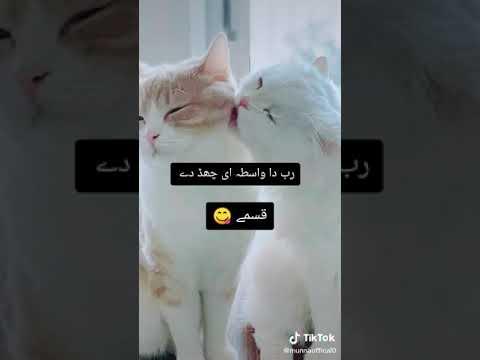 Romantic cute cats couple