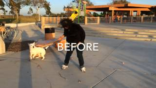 Dog Leash Pulling Training Orange County, Los Angeles, Long Beach & San Diego