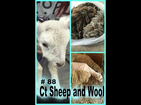 TVknittingpodcast-- Connecticut Sheep and Wool!