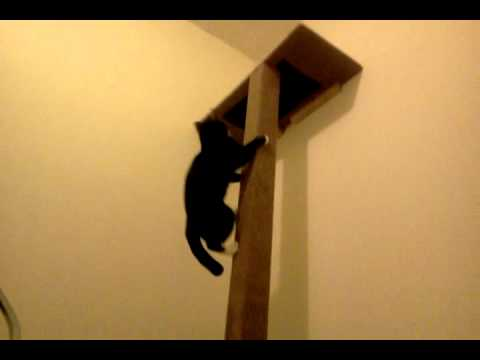 Easy to make cat climbing tower - YouTube