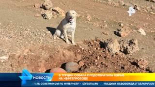 В Турции собака предотвратила теракт на нефтепроводе