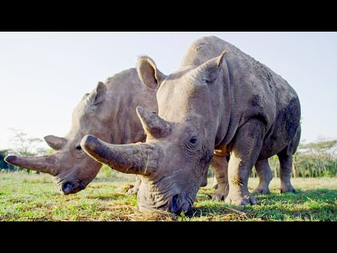 Top 5 Inspirational Animal Conservation Stories | BBC Earth