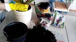 видео Комнатный цветок Замиокулькас — уход в домашних условиях.