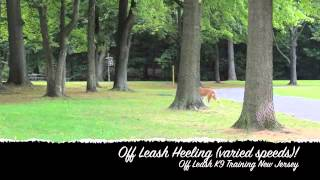Rescue Coonhound Off Leash K9 Training New Jersey