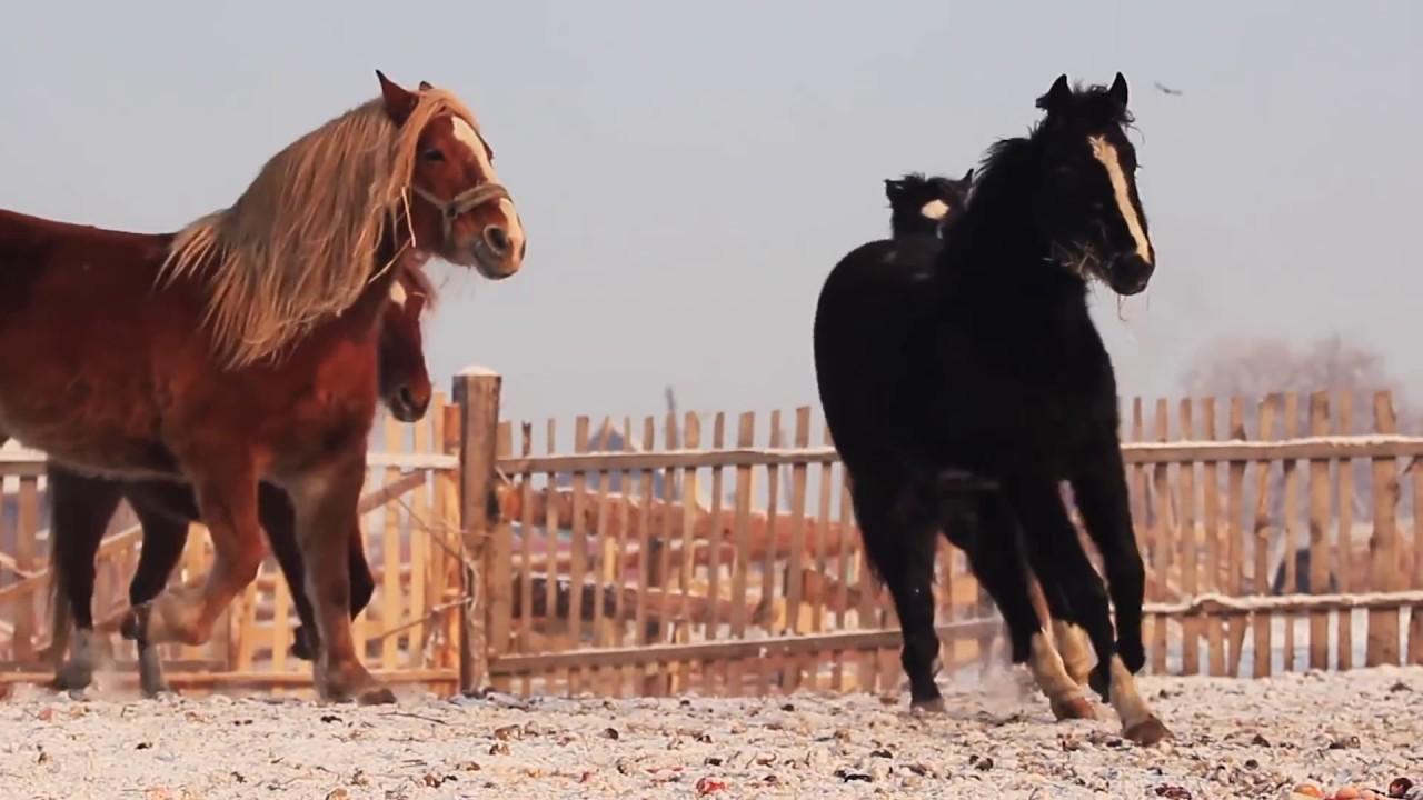 История одной лошадей фильмы