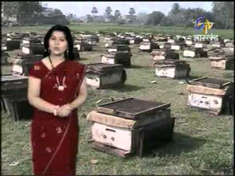 Film on Beekeeping by Shashi ji from Gaya District of Bihar