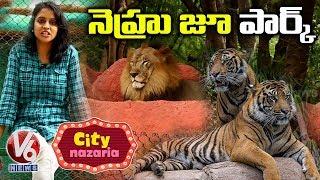 Nehru Zoological Park, Hyderabad | City Nazaria  Telugu News