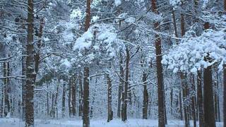 Relaxing nature scenes - In The Forest In Winter Season