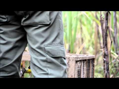 Soltura de aves no PELAG-Parque Estadual da Lagoa do Açu