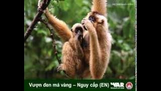 Một số loài Động vật hoang dã Việt Nam