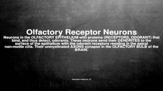 Medical vocabulary: What does Olfactory Receptor Neurons mean