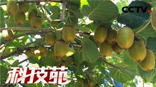 【Agricultural Technology】20171214 | CCTV Agriculture